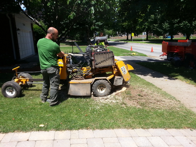 About Urban Canopy Tree Services & Urban Canopy Tree Services - Hamilton Ontario